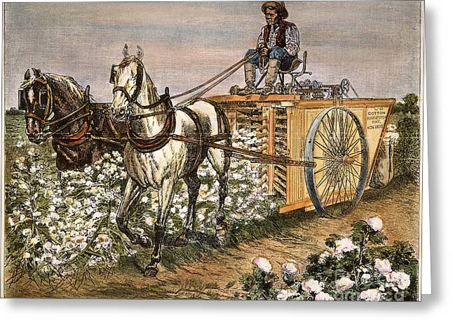 Freed Freedman Greeting Cards - Cotton Harvester, 1886 Greeting Card by Granger