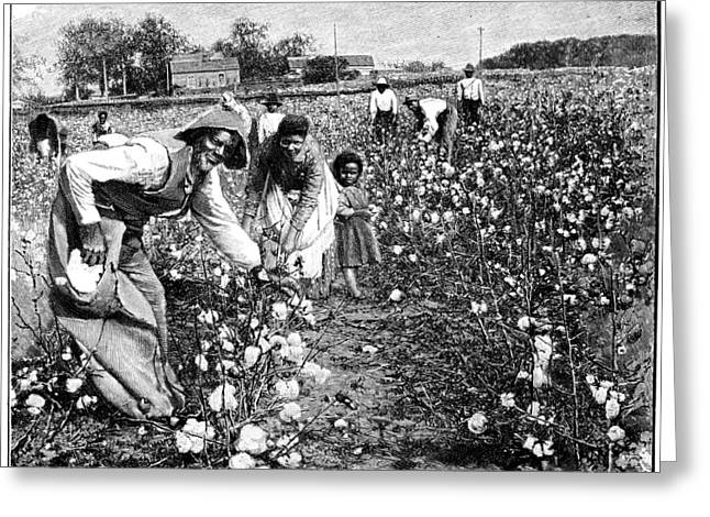 Cotton Pickers Greeting Cards - Cotton Industry, Early 20th Century Greeting Card by