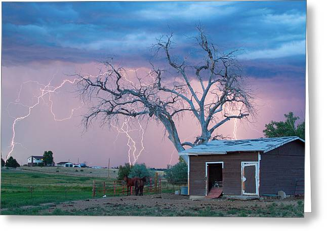 Lightning Strike Greeting Cards - Country Horses Lightning Storm NE Boulder County CO  76 Greeting Card by James BO  Insogna