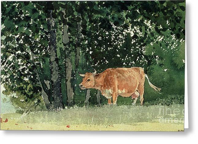 Cow Paintings Greeting Cards - Cow in Pasture Greeting Card by Winslow Homer