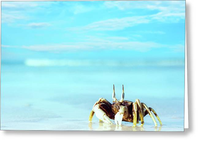 Ocean. Reflection Greeting Cards - Crab on the tropical beach Greeting Card by MotHaiBaPhoto Prints