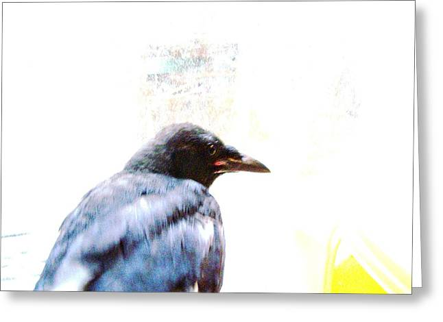Yomamabird Rhonda Greeting Cards - Crow Portrait Greeting Card by YoMamaBird Rhonda