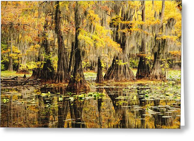 Caddo Lake Greeting Cards - Cypress Splendor Greeting Card by Iris Greenwell