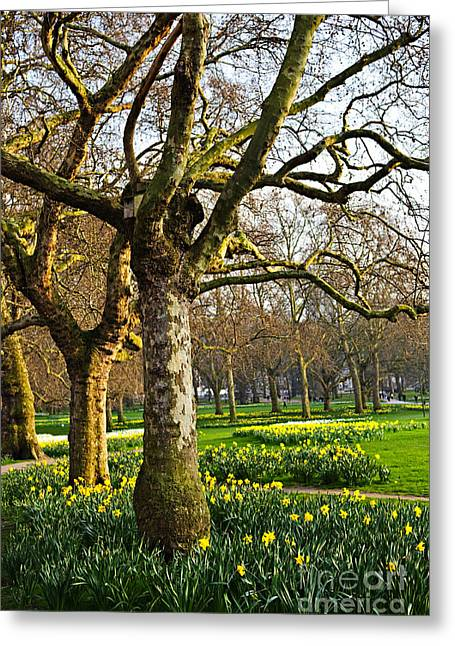 Daffodils Greeting Cards - Daffodils in St. Jamess Park Greeting Card by Elena Elisseeva