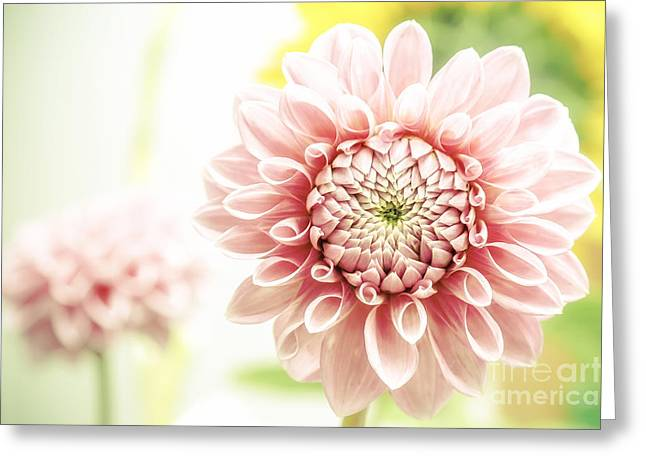 Greeting Cards - Dahlia Greeting Card by Martin Dzurjanik