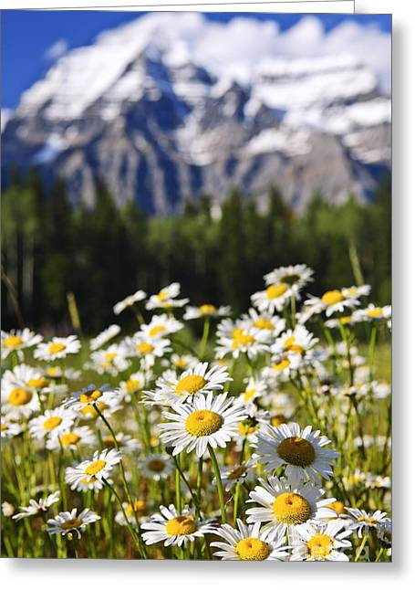British Columbia Greeting Cards - Daisies at Mount Robson provincial park Greeting Card by Elena Elisseeva