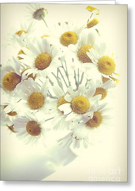 Daisy Greeting Cards - Daisies Greeting Card by HD Connelly