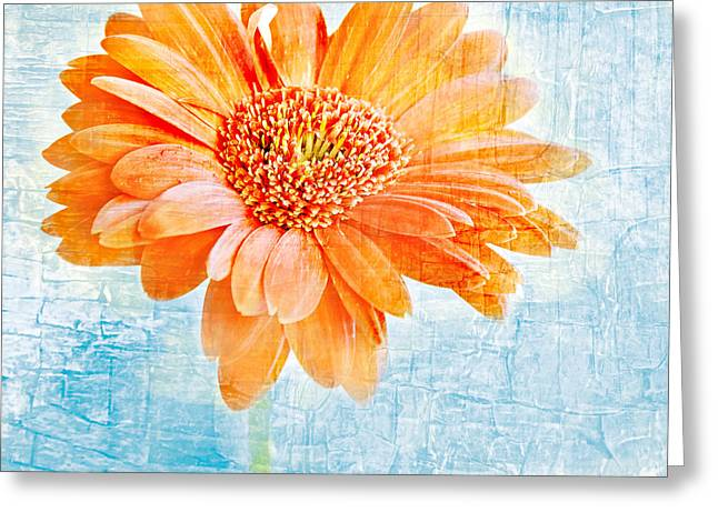 Painted Wood Photographs Greeting Cards - Daisy Greeting Card by HD Connelly