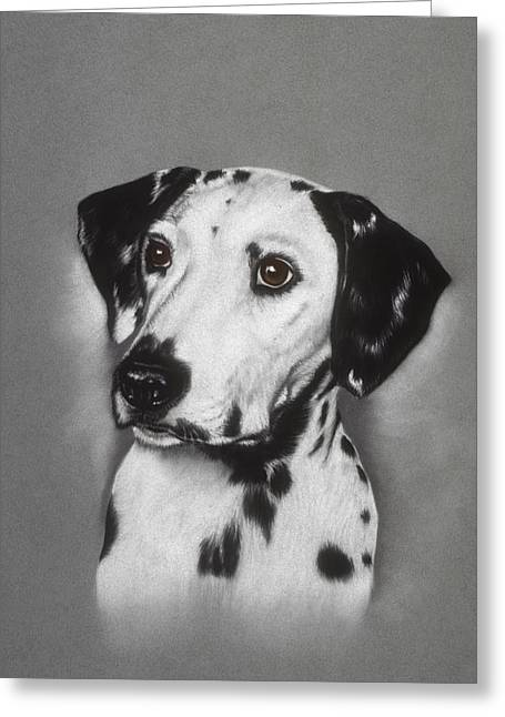 Bred Pastels Greeting Cards - Dalmatian Greeting Card by Patricia Ivy