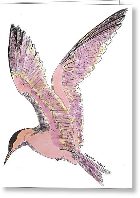 Tern Drawings Greeting Cards - Damara Tern Greeting Card by Nancy Mergybrower