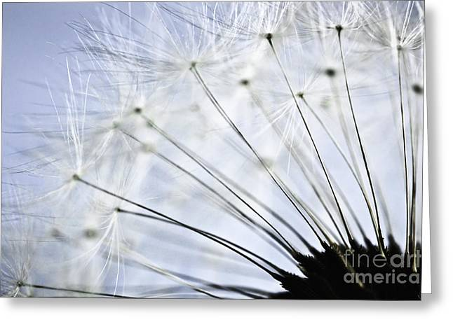 Floral Structure Greeting Cards - Dandelion  Greeting Card by Elena Elisseeva