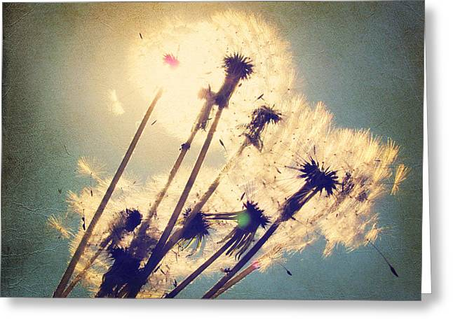 Large Photos Greeting Cards - Dandelions For You Greeting Card by Amy Tyler