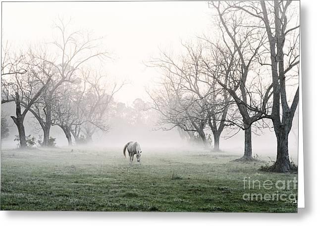 Louisiana Sunrise Greeting Cards - Daybreak Greeting Card by Scott Pellegrin