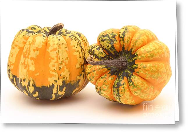 Acorn Greeting Cards - Decorative Squash Greeting Card by Ted Kinsman