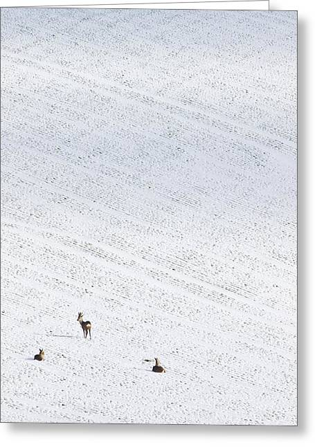 Deer In A Distant Snow Covered Field Greeting Card by Adrian Bicker