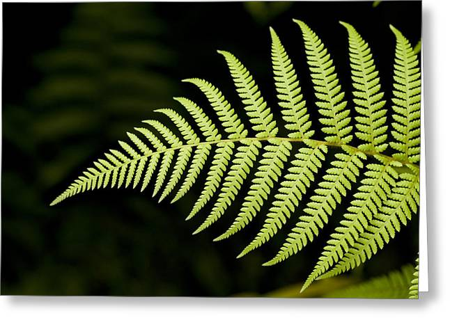 Ferns Greeting Cards - Detail Of Asian Rain Forest Ferns Greeting Card by Tim Laman