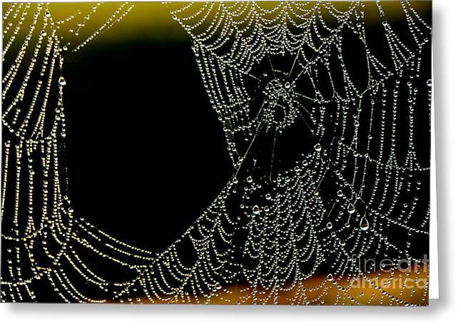 Dewdrops Greeting Cards - Dew on Spiderweb  Greeting Card by Thomas R Fletcher