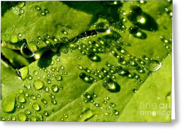 Dewdrops Greeting Cards - Dewdrops on Leaf Greeting Card by Thomas R Fletcher