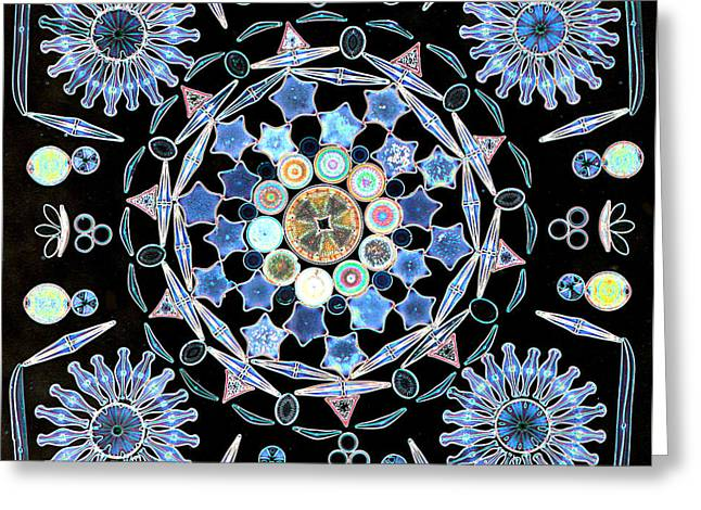 Alga Greeting Cards - Diatoms Greeting Card by M I Walker