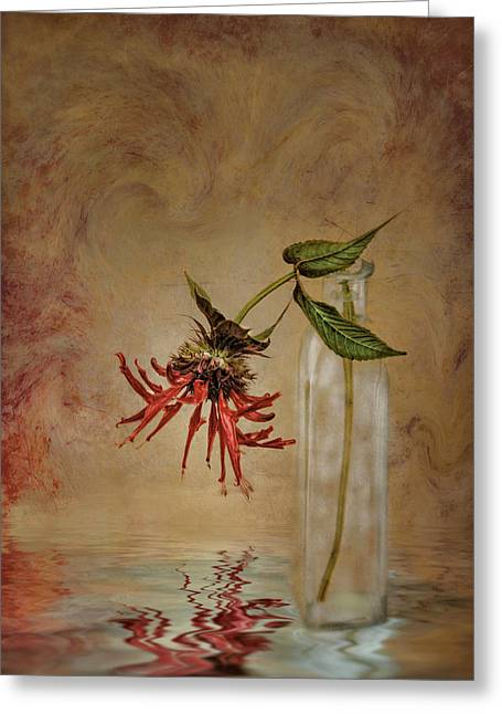 Balm Greeting Cards - Discovery Greeting Card by Robin-lee Vieira