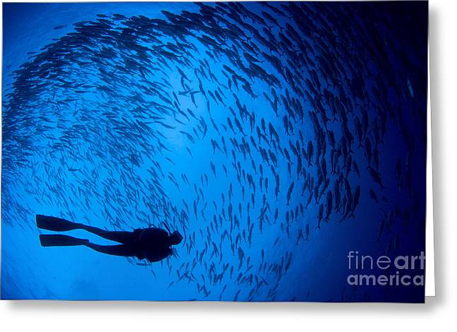 Diver And A Large School Of Bigeye Greeting Card by Steve Jones
