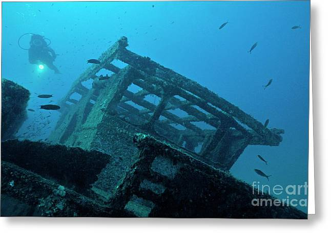 Women Only Greeting Cards - Diver exploring shipwreck Greeting Card by Sami Sarkis