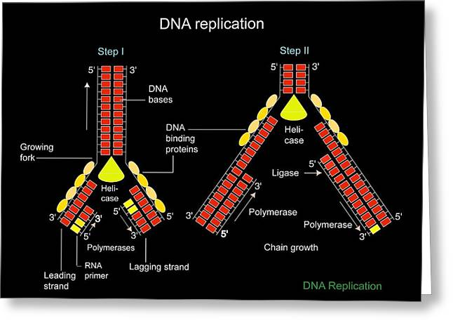 Dna Binding Protein Greeting Cards - Dna Replication, Artwork Greeting Card by Francis Leroy, Biocosmos