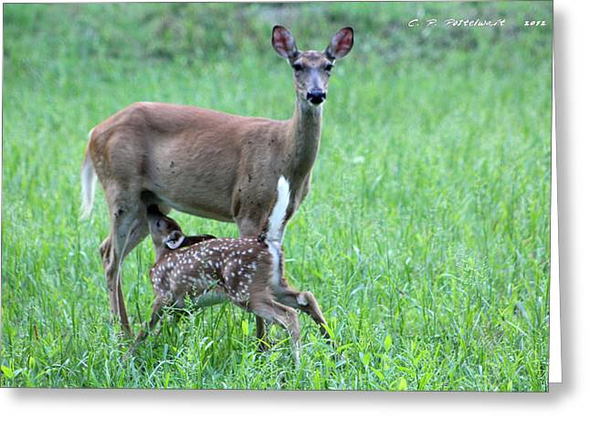 Doe And Fawn Greeting Card by Carolyn Postelwait
