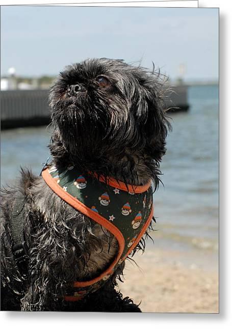 Dog Beach Card Greeting Cards - Dog 63 Greeting Card by Joyce StJames