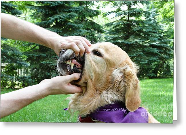 Check Up Greeting Cards - Dog Dental Check Greeting Card by Photo Researchers, Inc.