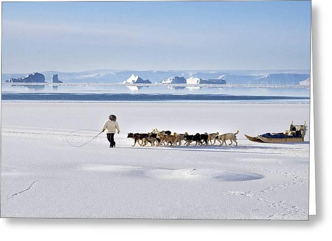 Husky Greeting Cards - Dog Sled, Qaanaaq, Greenland Greeting Card by Louise Murray