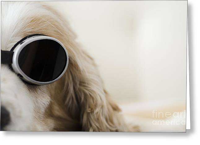 Oval Photographs Greeting Cards - Dog with sunglasses Greeting Card by Mats Silvan