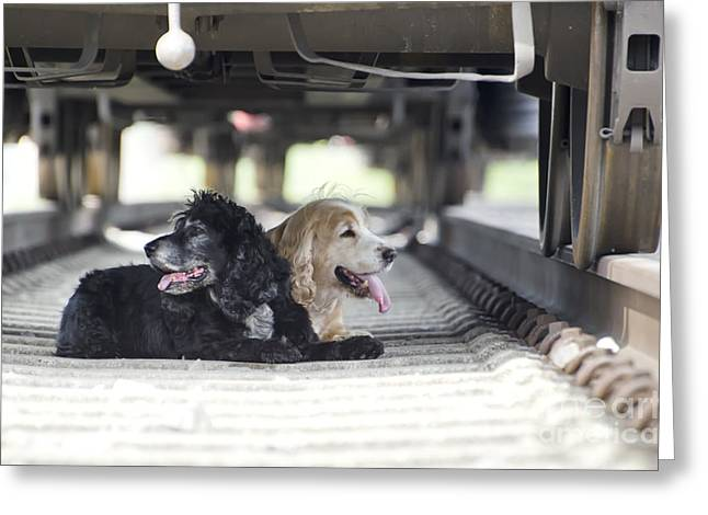 Abandoned Pets Greeting Cards - Dogs lying under a train wagon Greeting Card by Mats Silvan