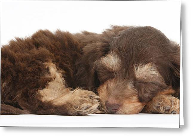 Sleeping Baby Animal Greeting Cards - Doxie-doodle Puppies Greeting Card by Mark Taylor