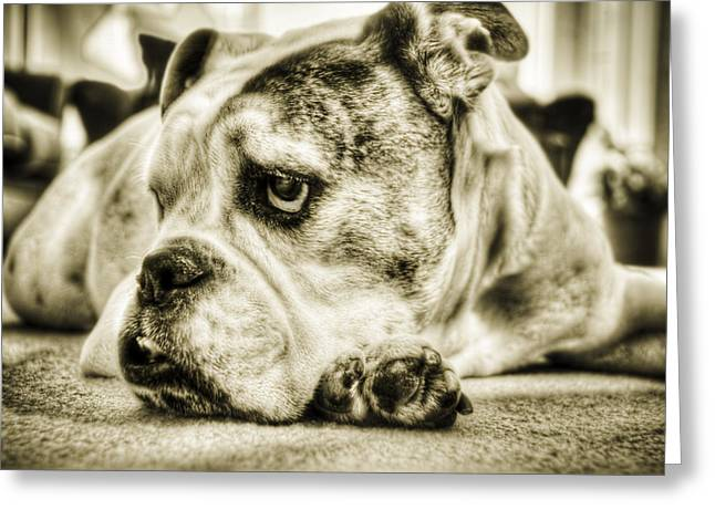 Bulldogs Greeting Cards - Dozer Greeting Card by Andrew Kubica