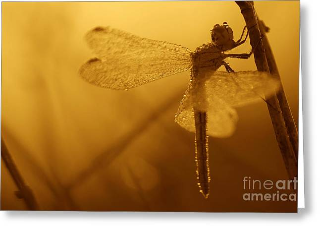 Light Magnifications Greeting Cards - Dragonfly in drops Greeting Card by Odon Czintos