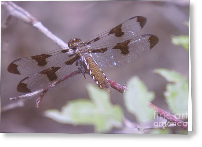 Flying Insect Greeting Cards - Dragonfly Resting  Greeting Card by Jeff  Swan