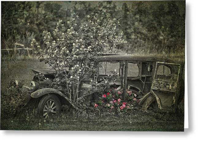 Jerry Cordeiro Framed Prints Greeting Cards - Driven To Find Love  Greeting Card by Jerry Cordeiro