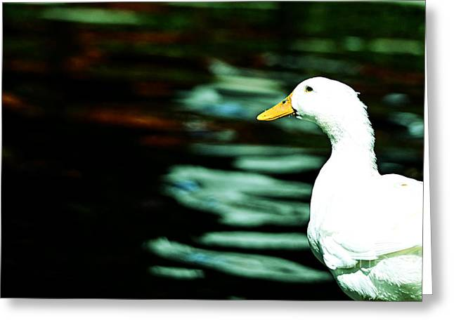 Baby Mallards Digital Art Greeting Cards - Duck Greeting Card by Nilay Tailor