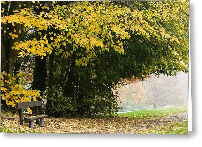 Colors Of Autumn Greeting Cards - Dun Na Ri Forest Park, County Cavan Greeting Card by Peter McCabe