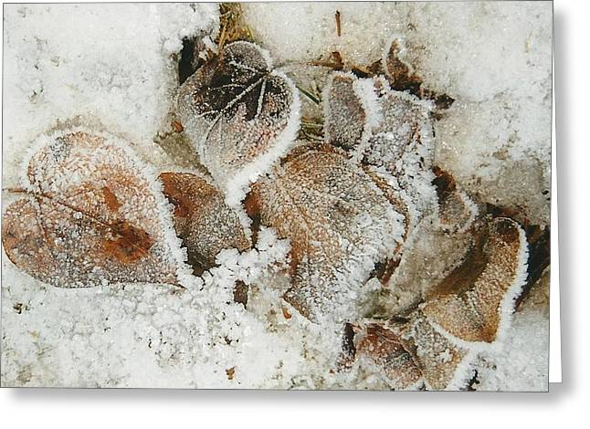 Light Grey Greeting Cards - Edged in Frost Greeting Card by Shirley Sirois