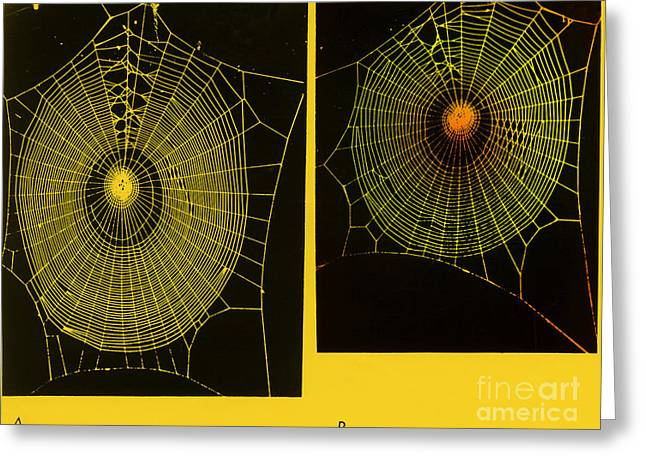 Arachnida Greeting Cards - Effect Of Psilocybin Greeting Card by Omikron