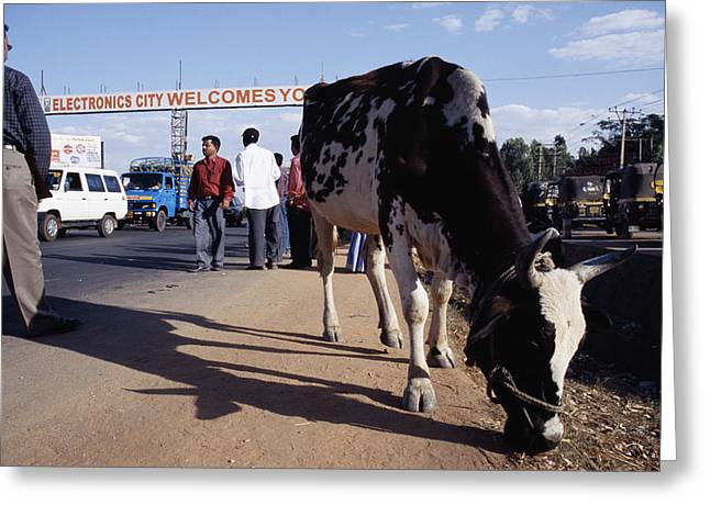 Sacred Cow Greeting Cards - Electronics City, India Greeting Card by Volker Steger