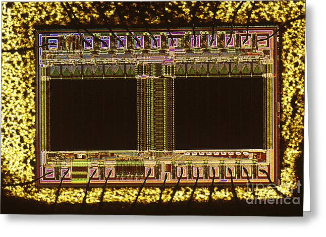 Light Microscopy Greeting Cards - Eprom Greeting Card by Michael W. Davidson