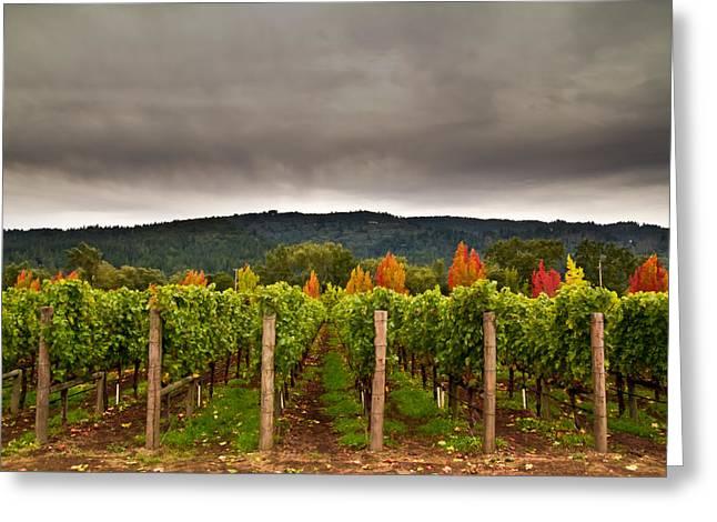 Napa Valley Vineyard Greeting Cards - Estate Greeting Card by Ryan Weddle
