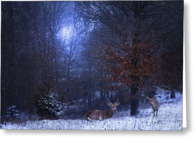 Does. Winter Greeting Cards - Evening At Home Greeting Card by Ron Jones