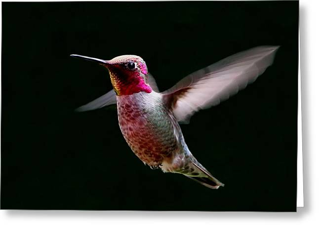 Hovering Greeting Cards - Evening Glow  Greeting Card by Angie Vogel