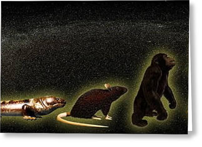 Evolution Of Man Greeting Card by Christian Darkin