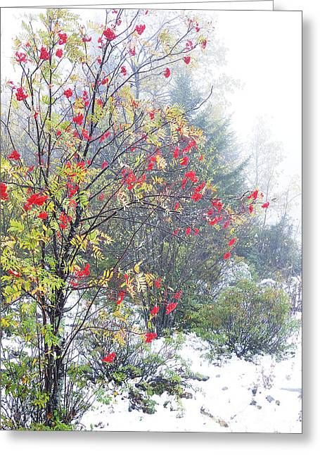 West Virginia Highlands Greeting Cards - Fall color and Snow  Greeting Card by Thomas R Fletcher