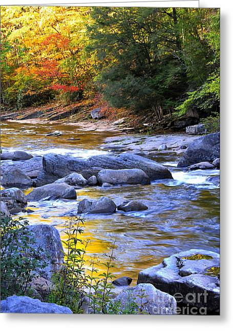Rushing Stream Greeting Cards - Fall Color Williams River Greeting Card by Thomas R Fletcher